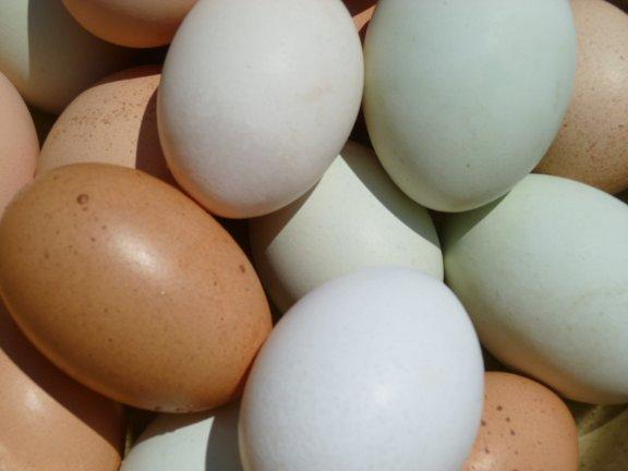 eggs1sm