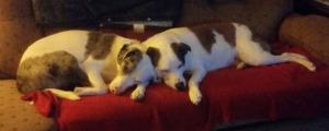Bella & Abby snoozing sm