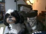 Lori's Oreo & friend